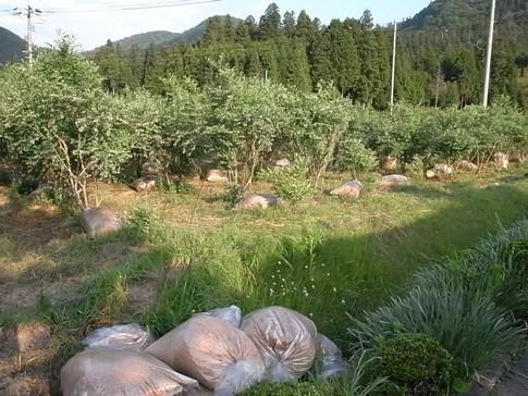 f:id:akinosato:20120603175400j:image