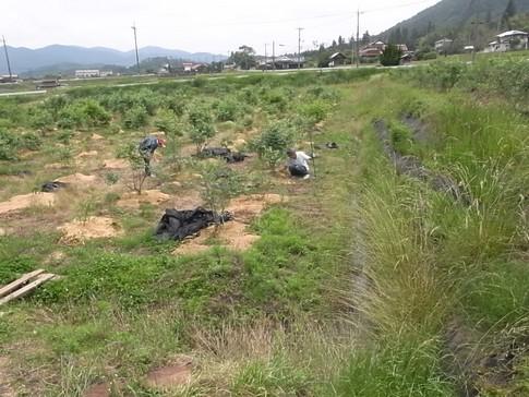 f:id:akinosato:20120615115230j:image