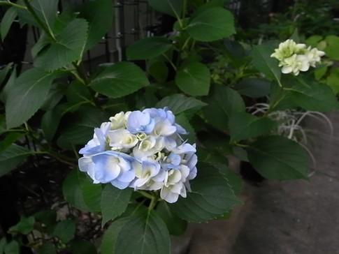 f:id:akinosato:20120620152305j:image