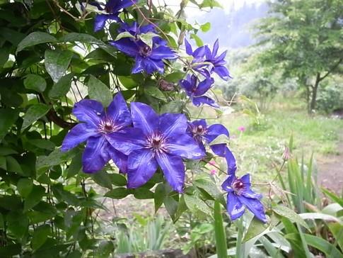 f:id:akinosato:20120624175301j:image