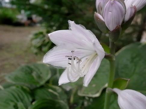 f:id:akinosato:20120628174521j:image