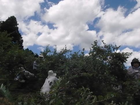 f:id:akinosato:20120825115151j:image