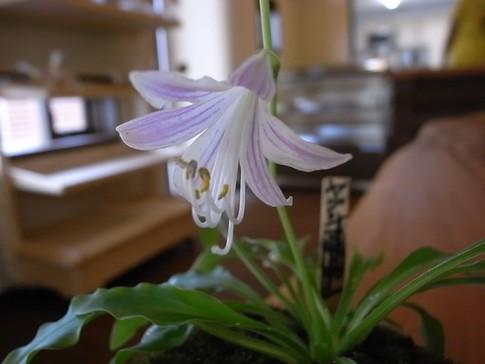f:id:akinosato:20120905104651j:image