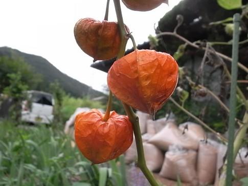 f:id:akinosato:20120908153754j:image
