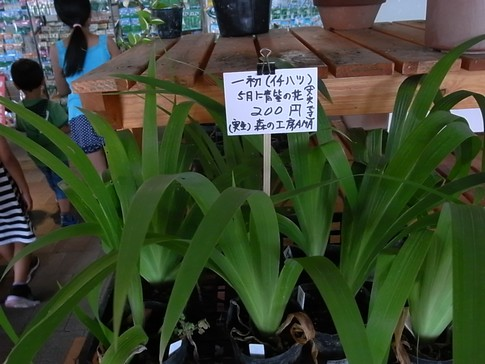 f:id:akinosato:20120916132948j:image
