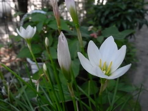 f:id:akinosato:20120921115524j:image