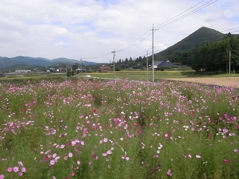 f:id:akinosato:20120923141432j:image