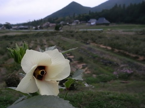f:id:akinosato:20121006174146j:image