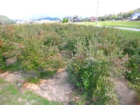f:id:akinosato:20121007135447j:image