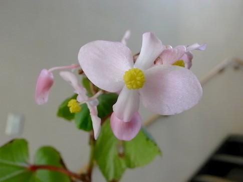 f:id:akinosato:20121012154625j:image