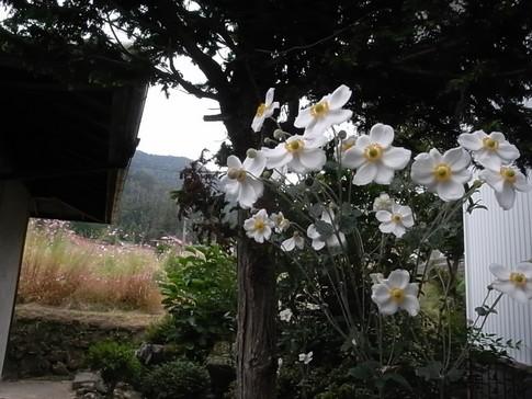 f:id:akinosato:20121014144306j:image