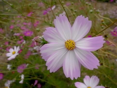 f:id:akinosato:20121014150825j:image