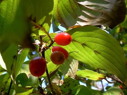 f:id:akinosato:20121025122541j:image
