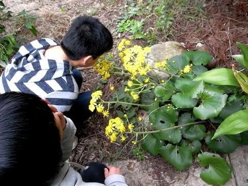 f:id:akinosato:20121030130913j:image
