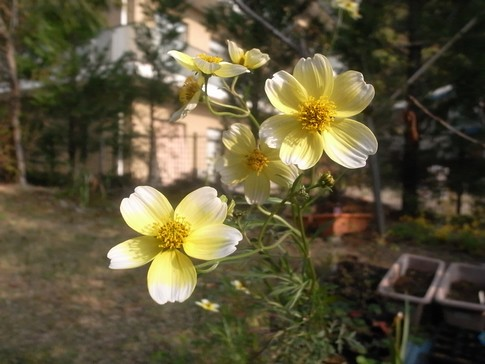 f:id:akinosato:20121108150735j:image