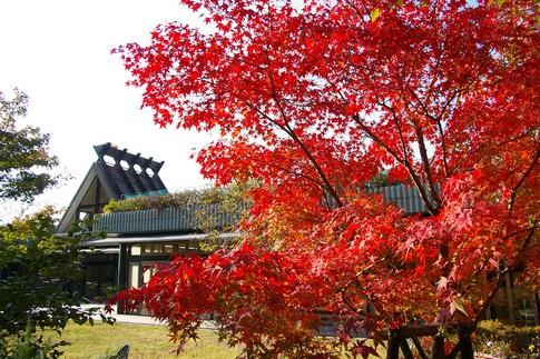 f:id:akinosato:20121112142304j:image
