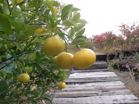 f:id:akinosato:20121121155555j:image