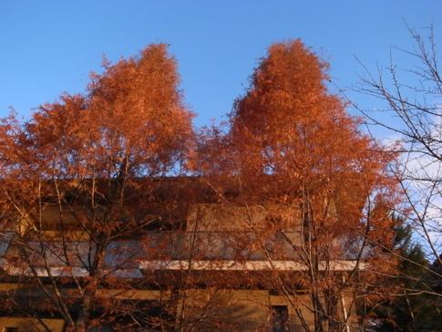 f:id:akinosato:20121206170207j:image