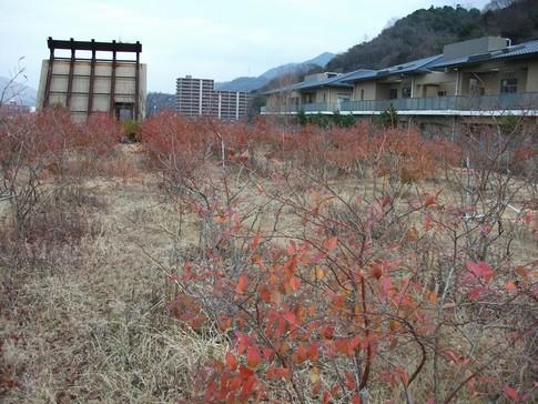 f:id:akinosato:20130117142453j:image