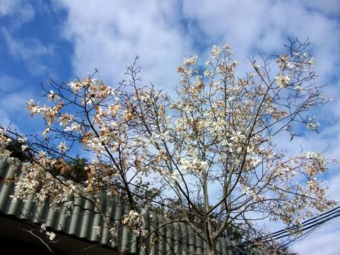 f:id:akinosato:20130322085031j:image