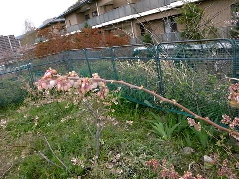f:id:akinosato:20130410141052j:image