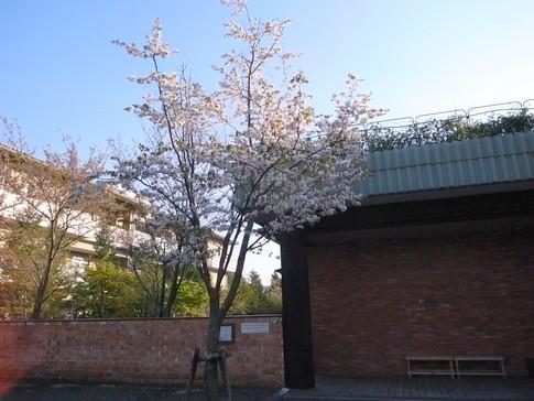 f:id:akinosato:20130412171828j:image