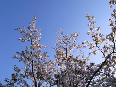 f:id:akinosato:20130412171909j:image