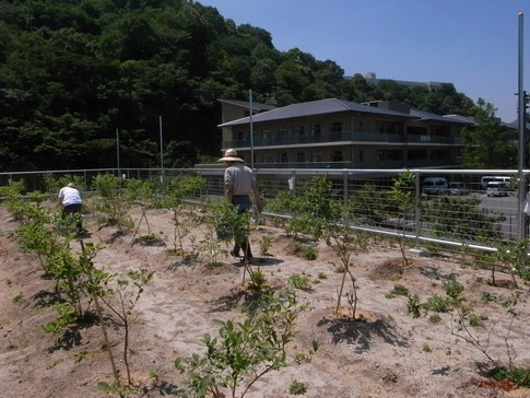 f:id:akinosato:20130524104236j:image