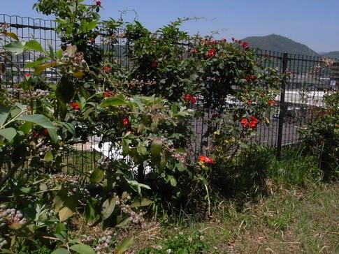 f:id:akinosato:20130524121334j:image