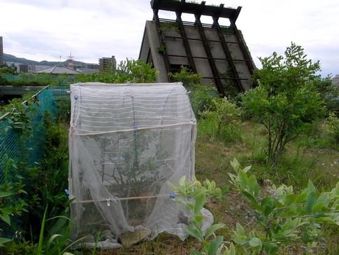 f:id:akinosato:20130619085639j:image