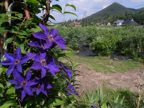 f:id:akinosato:20130629144239j:image