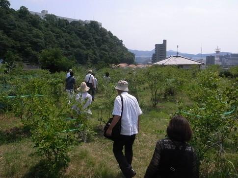 f:id:akinosato:20130807134558j:image