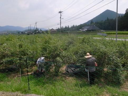 f:id:akinosato:20130809112308j:image