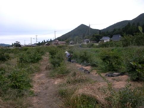 f:id:akinosato:20130929162927j:image