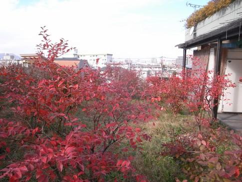f:id:akinosato:20131219120121j:image