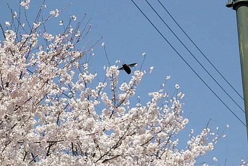 f:id:akinosato:20140401124313j:image