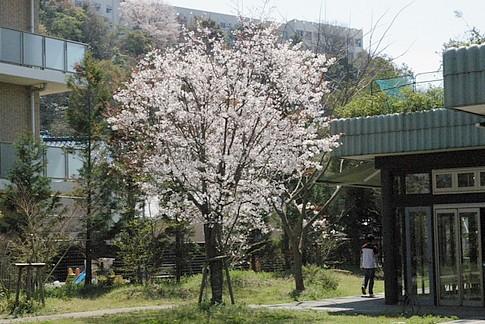 f:id:akinosato:20140401124622j:image