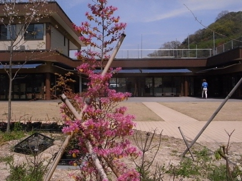 f:id:akinosato:20140408130206j:image