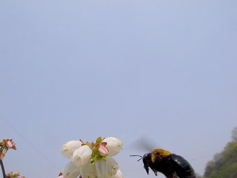 f:id:akinosato:20140410130934j:image