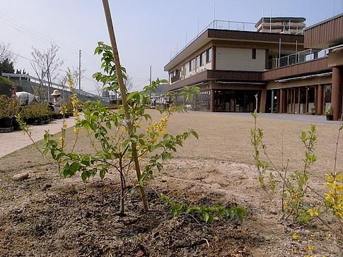 f:id:akinosato:20140411142400j:image
