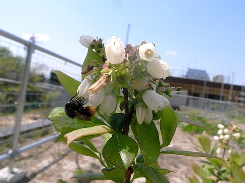f:id:akinosato:20140423133749j:image