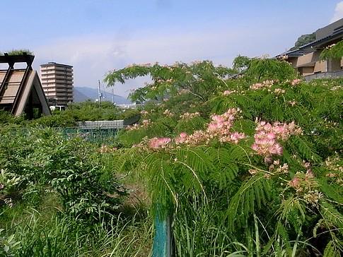 f:id:akinosato:20140616144706j:image