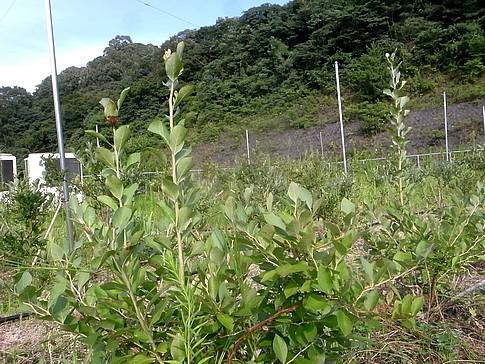 f:id:akinosato:20140812161631j:image