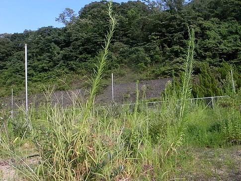 f:id:akinosato:20140812161649j:image
