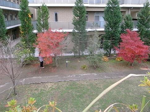 f:id:akinosato:20141126123715j:image