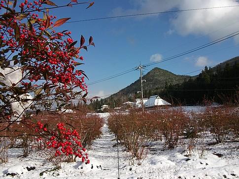 f:id:akinosato:20141214192616j:image