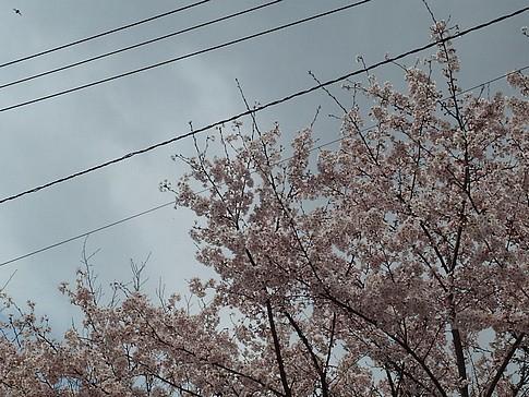 f:id:akinosato:20150401124601j:image