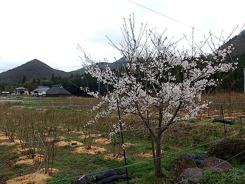 f:id:akinosato:20150405165719j:image