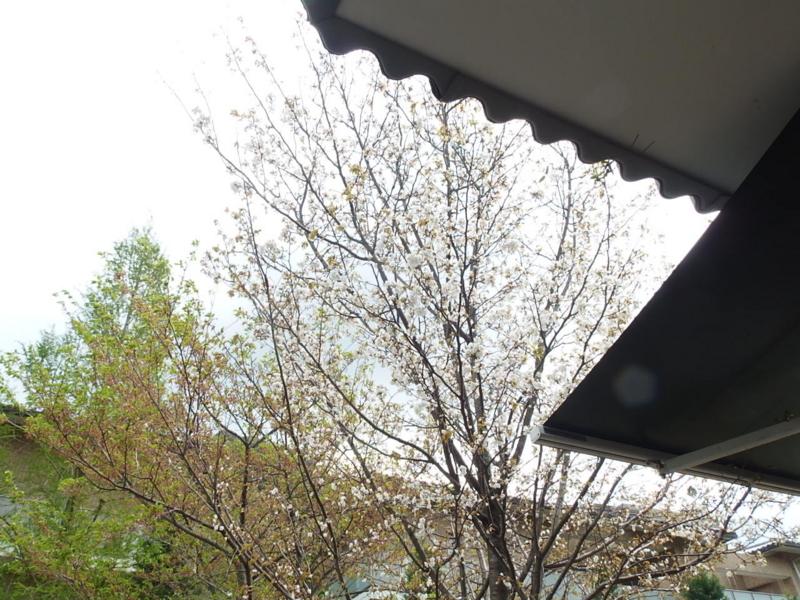 f:id:akinosato:20150415132807j:image