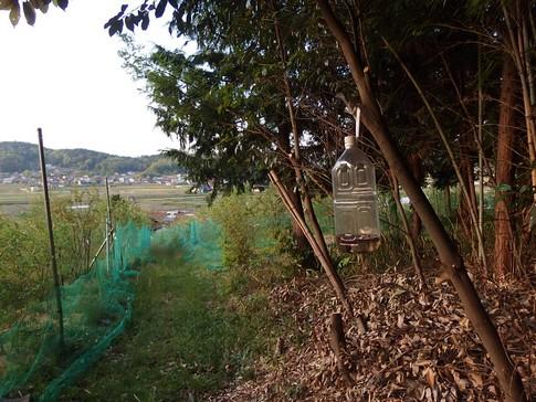 f:id:akinosato:20150502181916j:image